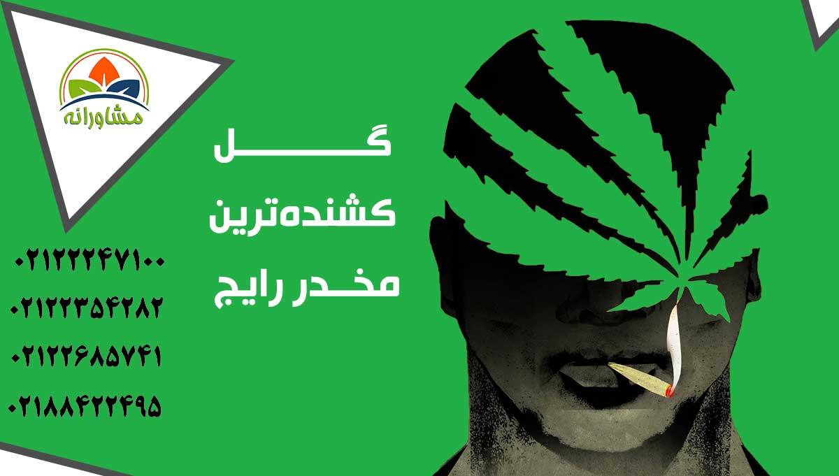 گل مخدر - گل ماریجوانا عوارض